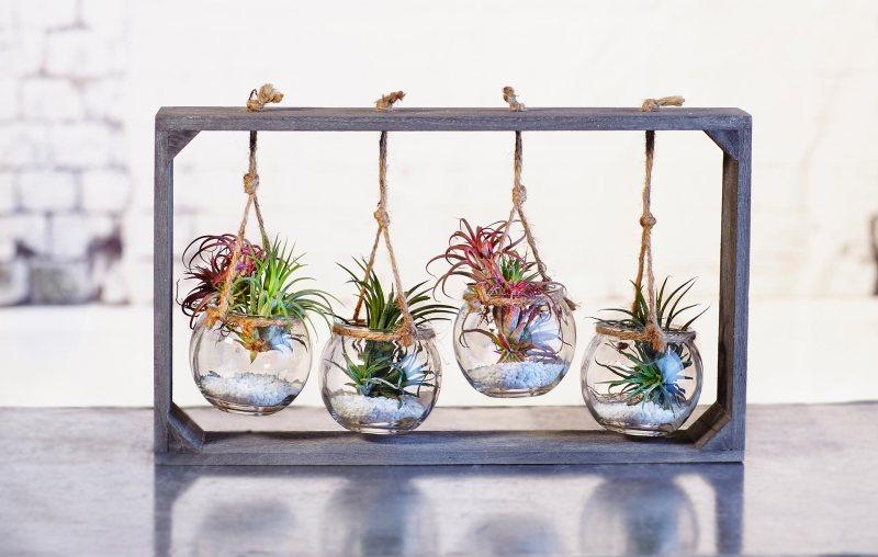 <strong>Plantes per a tothom</strong>  <br>Les plantes més agraïdes per a principiants