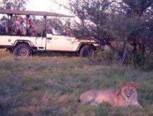 Gay African Safari Tour