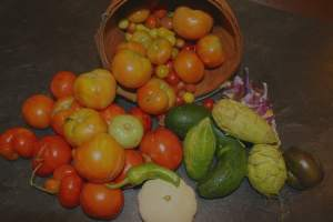 Home Farming – hello tomatoes!
