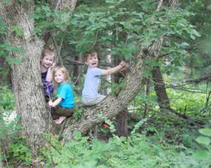 Summertime is for climbing trees – freeze this moment