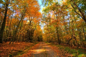 7 Stunning Fall Foliage Views in West Virginia