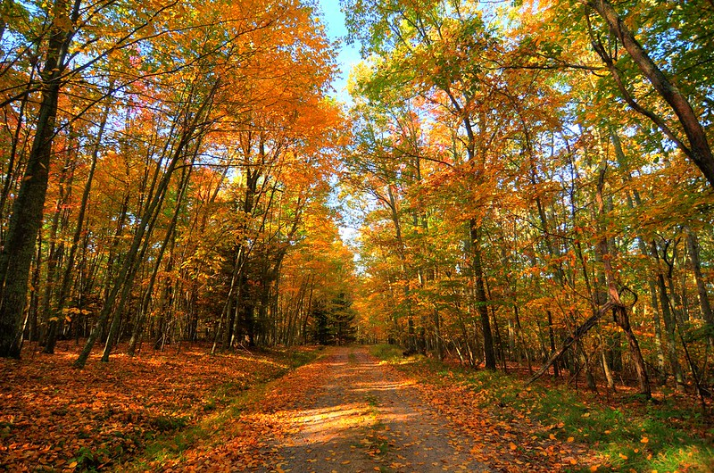 Seneca State Forest in the Fall