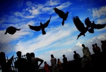 twitterbirds1