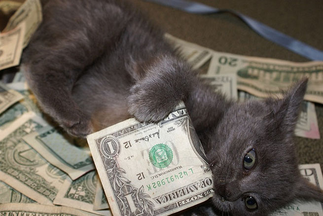 A Kitten With Cash