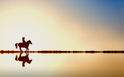 DNA spring- en dressuurpaarden