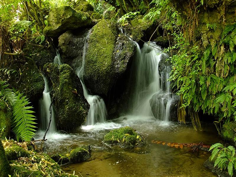 Wairere Te-Wairoa Falls Cascades