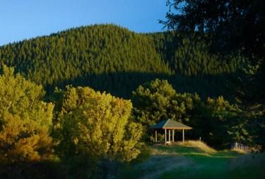Evening at Eastwoodhill Arboretum