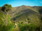 Rimutaka Cycle Trail towards Cross Creek