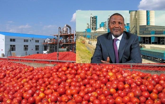 Dangote Tomato