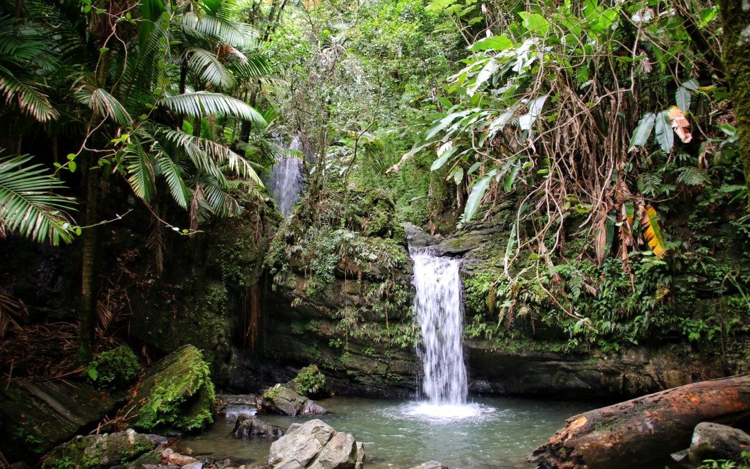Puerto Rico: El Yunque National Forest, Getting Lost In Neverland