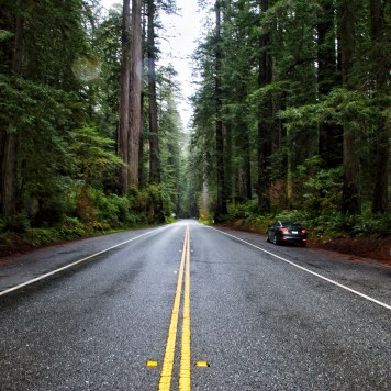 Scenic Drive Redwoods National Park