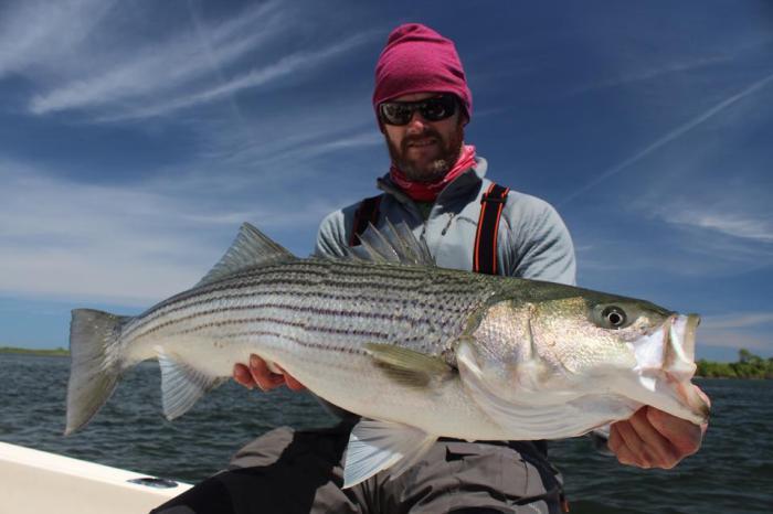 Eliot Jenkins Striped Bass