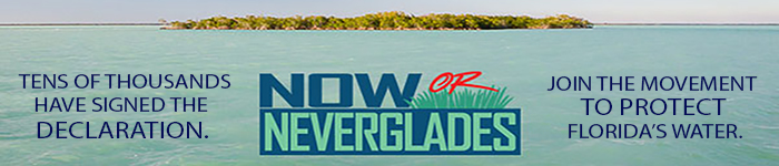 now or neverglades everglades