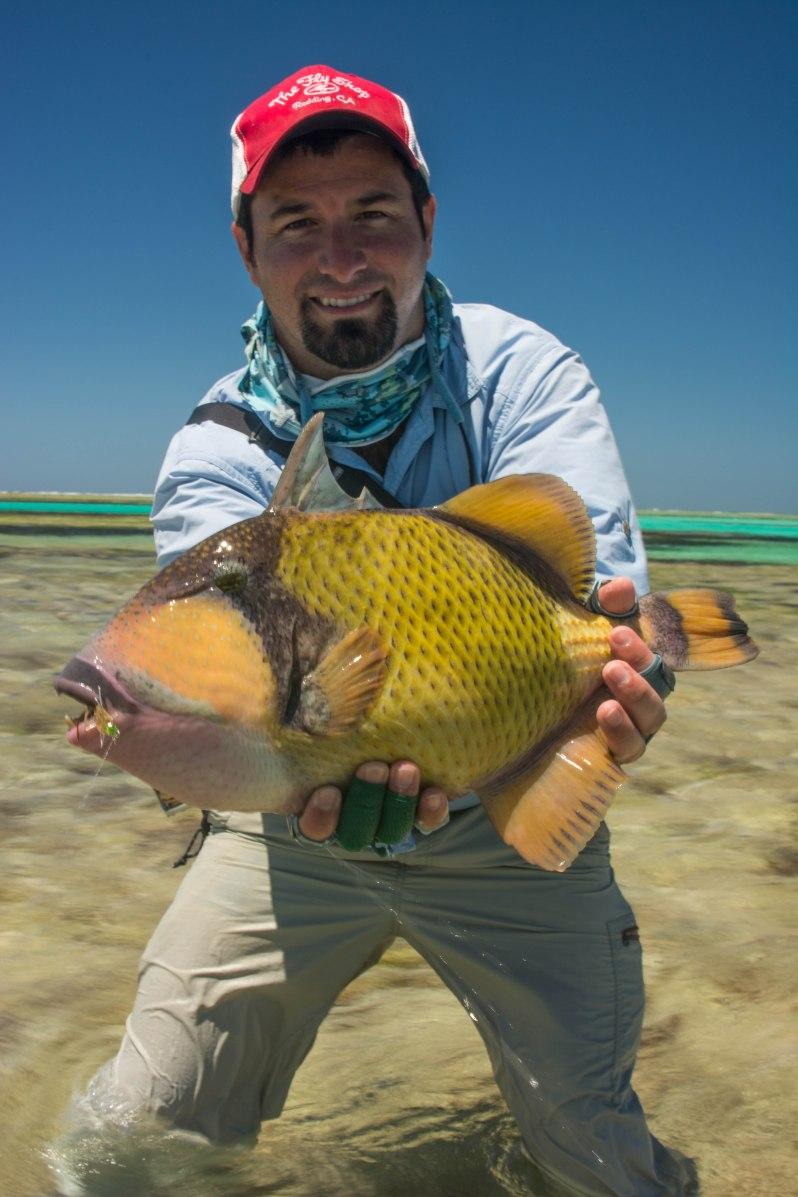 Indian Ocean Triggerfish Farquhar Seychelles