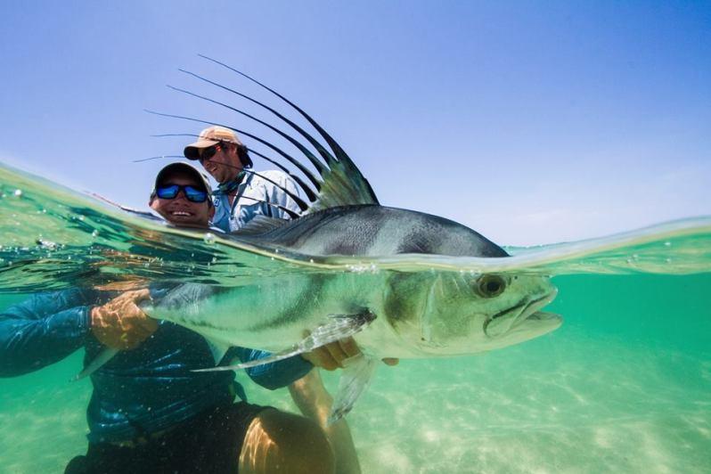 underwater roosterfish