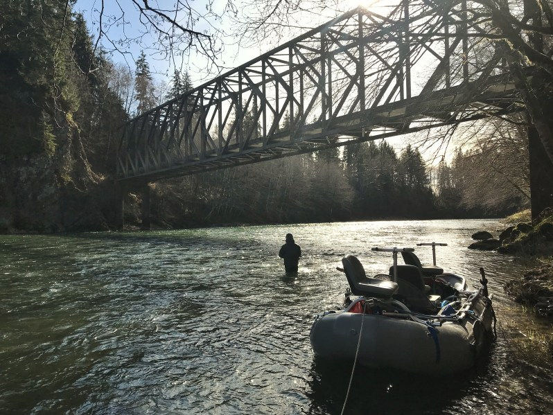 Forks Washington steelhead