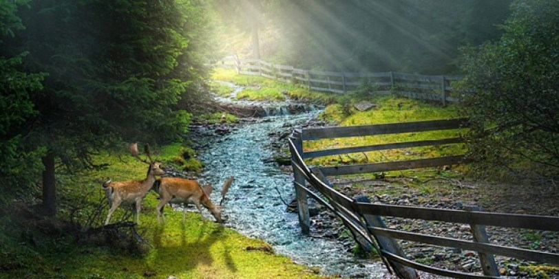 The Magic of Tuscany sunlit stream picture