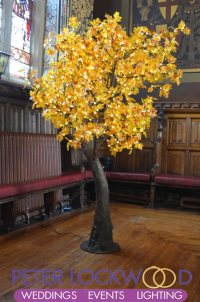 led maple tree hire