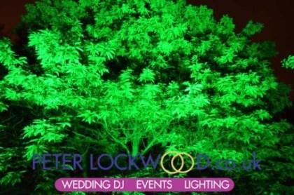 green tree lighting