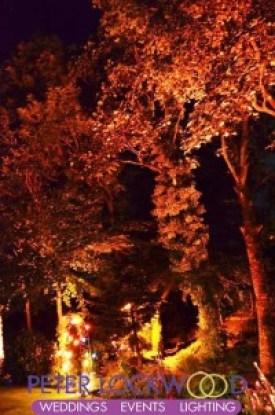 autumn-coloured-tree-lighting