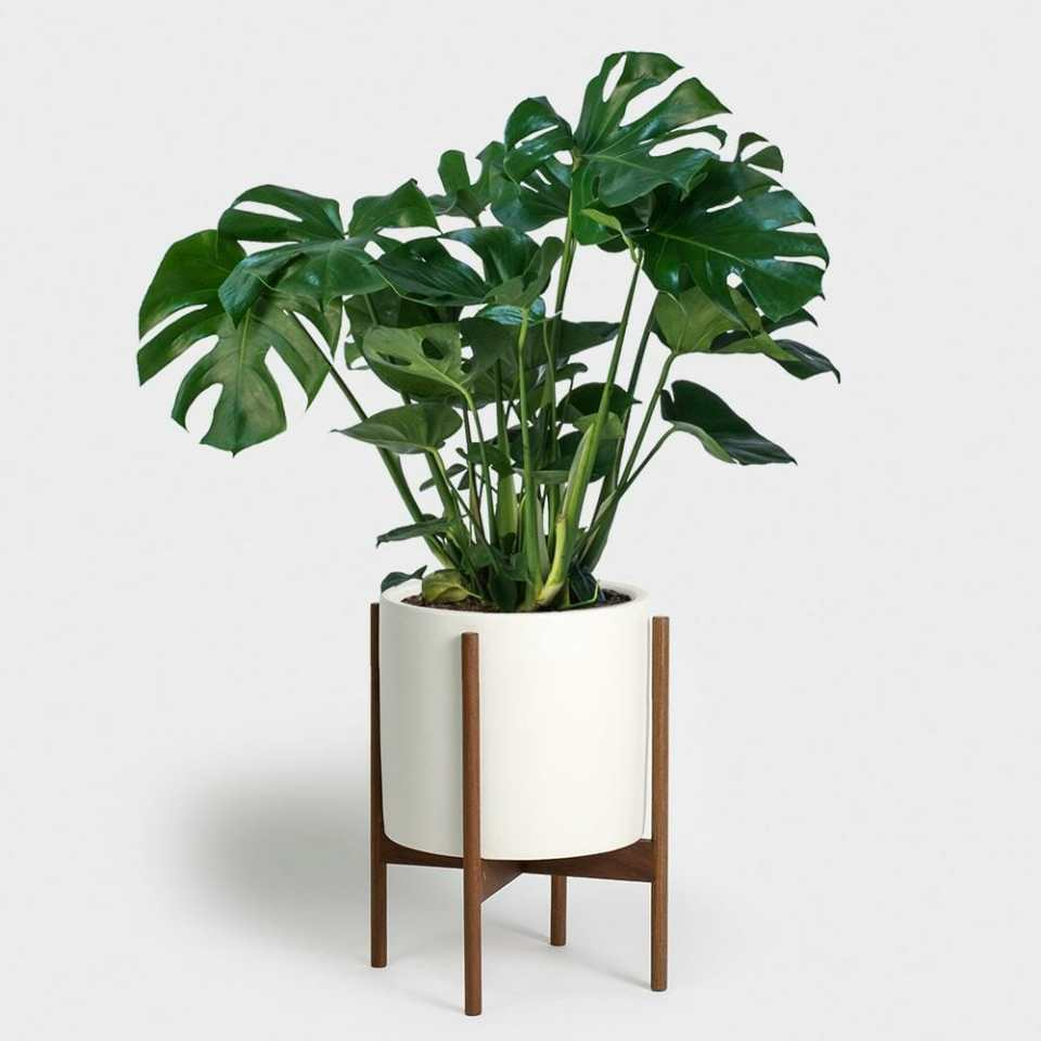 philodendren for apartment best plant