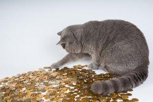 geld en een kat