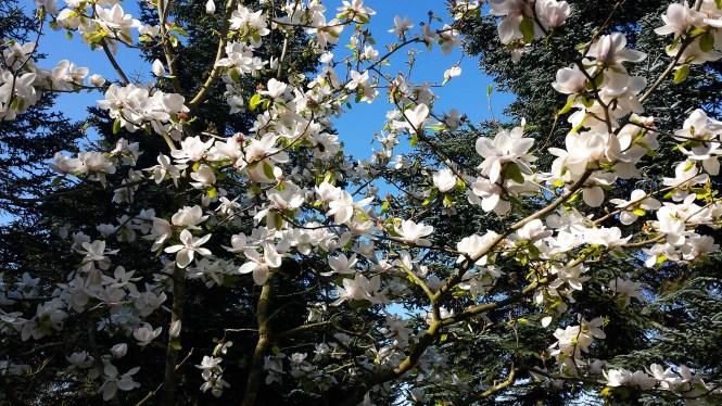 Spring/ Vera's Cooking/ Verascooking.com/