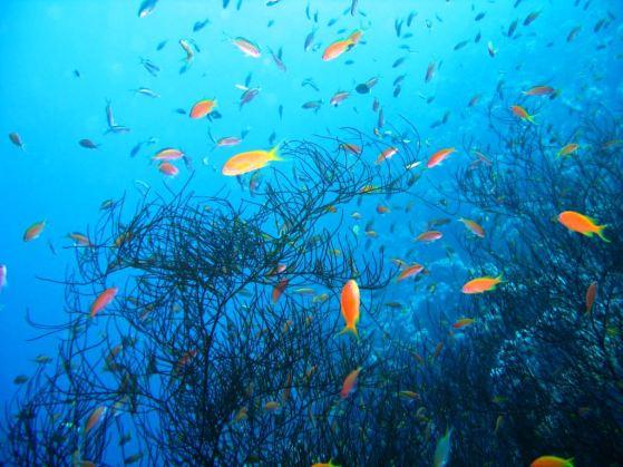 Belize i Velika plava rupa