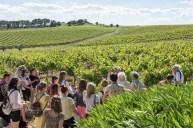 Puech-haut vinogradi