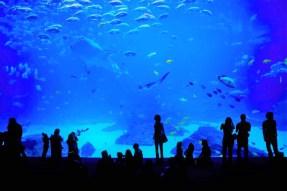 U poseti akvarijumu Mare Nostrum
