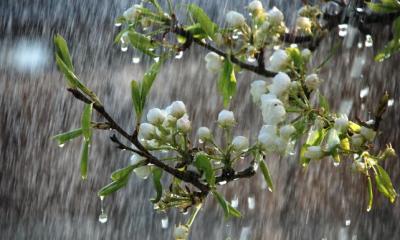 deszcz (1)