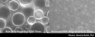 Izquierda: Leche cruda magnificada 4200 veces. Derecha: Leche pasteurizada magnificada 4200 veces