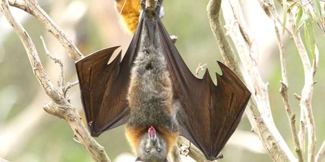 La abominación de comer murciélagos, Antonio Cruz