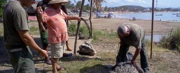 Cocodrilo capturado en la playa de Melaque, Jalisco. Foto: Unidad Estatal de Protección Civil