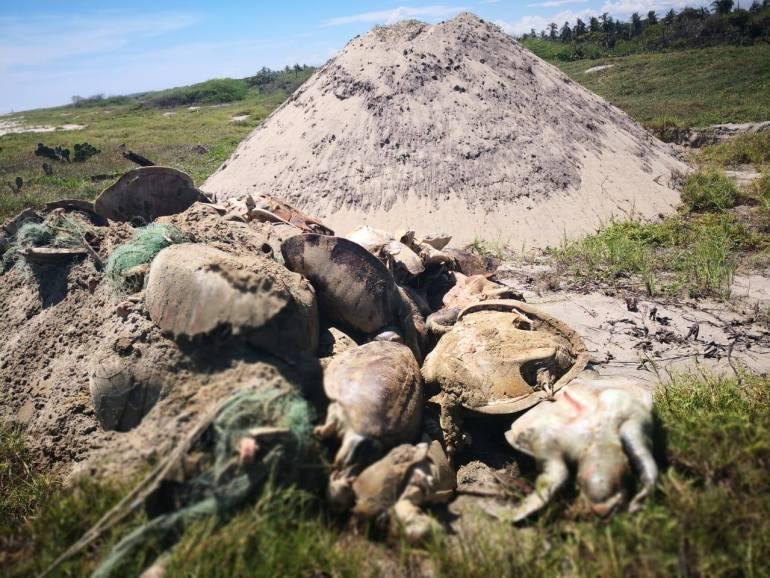 Tortugas muertas por enmallamiento en Oaxaca. Imagen tomada de Sea Shepherd México