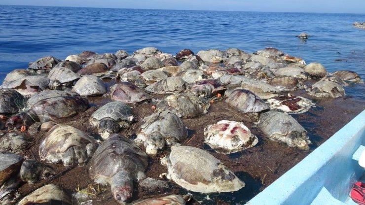 tortugas marinas muertas en Oaxaca