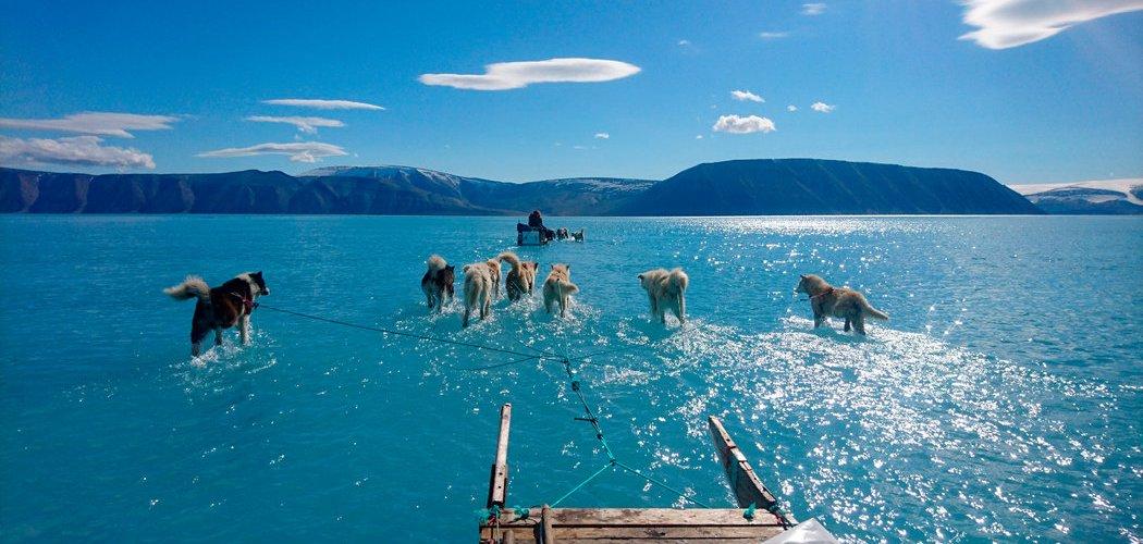 n trineo de nieve jalado por perros atraviesa el agua del deshielo en el noroeste de Groenlandia, a mediados de junio de 2019. Credit Steffen M. Olsen/Instituto Meteorológico de Dinamarca