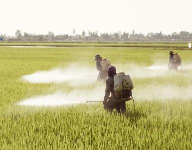 uso de pesticidas. Foto: Unión Europea