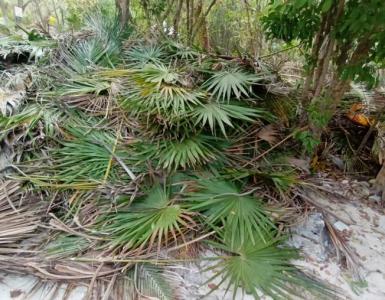 Palazuelos Tulum Palma Parque Nacional