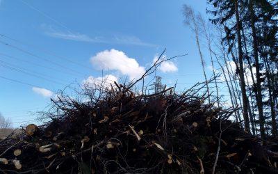 Suomi hämärtää EU:n kestävän rahoituksen tavoitteita metsäpolitiikallaan