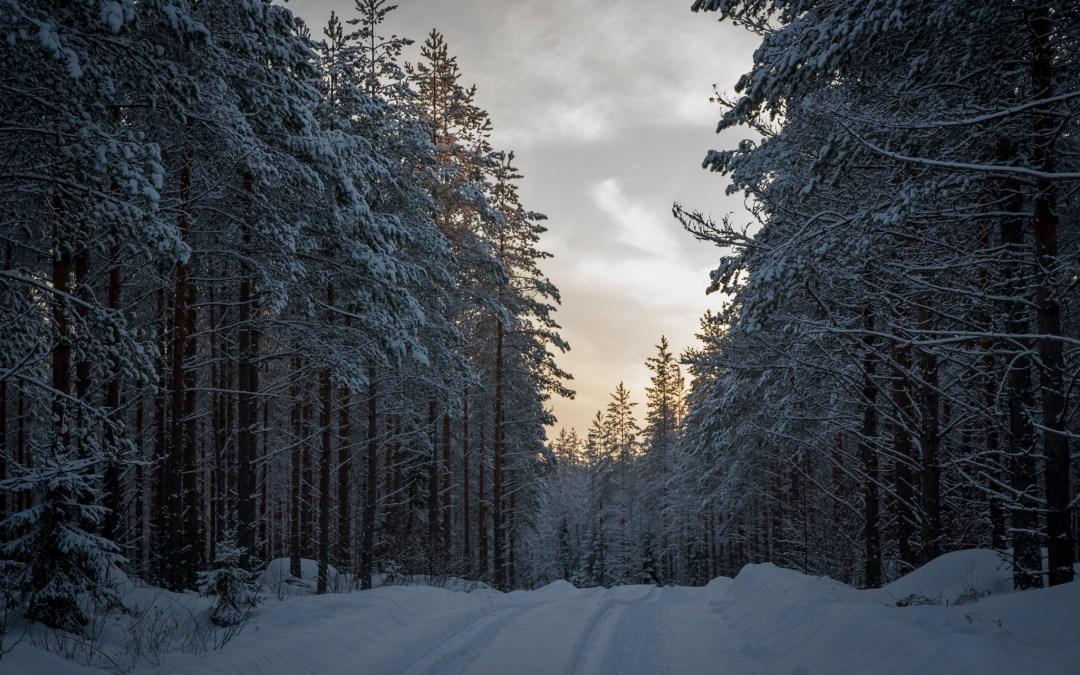 Pohjoisen sellutehdashankkeet huonontavat ympäristön tilaa: Kemera-tuilla rakennetaan metsäteitä ja ojitetaan soita