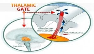 Thalamic Gate