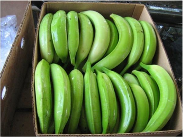 Verdufrut 187 Proceso De Pl 225 Tano