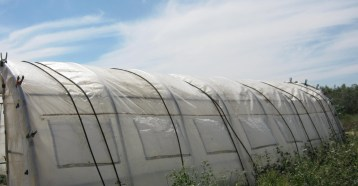 invernadero-ecologico