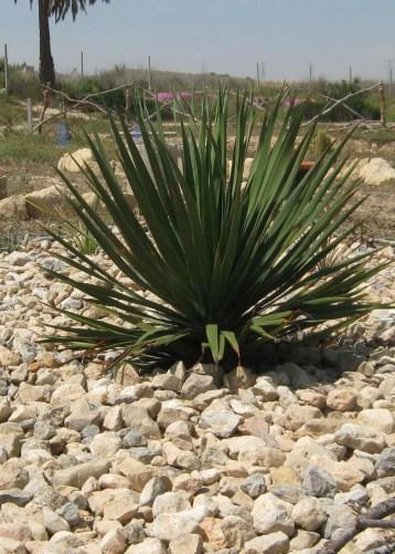 planta-ecollavor-4