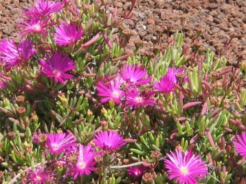 planta-flor-ecollavor