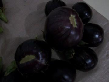 berenjena-de-florencia-negra-redonda-22