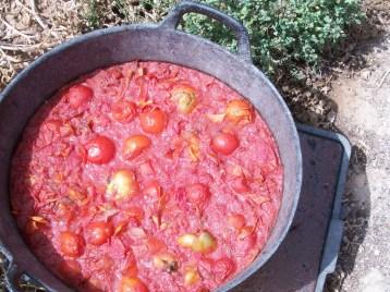 semillero-tomates-100_3316