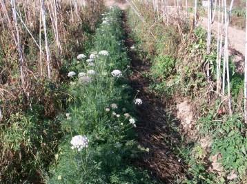 verduras-ecologicas-de-otono-100_3455