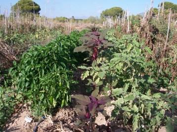 verduras-ecologicas-de-otono-100_3457